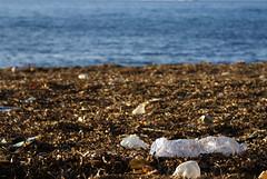 Io amo il mare... (Dr eelgood ) Tags: sea sky italy sadness italia mare blu natura help cielo rubbish sicily palermo rifiuti azzurro sicilia italians drfeelgood altavilla aiuto peppebrico trashbit