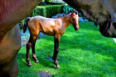 DSC_0006 (popeye logic) Tags: horses coalharbour