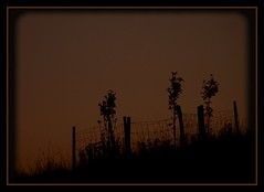 Weekend (Kirsten M Lentoft) Tags: trees sunset silhouette fence hill momse2600 kirstenmlentoft