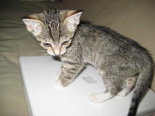 lyla likes ibook