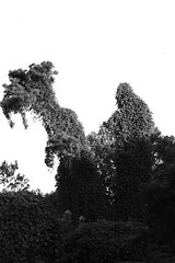 B&W Kudzu Monsters