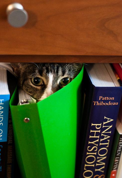 Kitten says, I can haz study?
