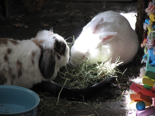 eating hay in the sun - 2