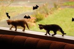 DSC_0689 (*lalalaurie) Tags: thanks kittens kitties lauriecinotto ibkc pleasedontusemypictureswithoutseekingmypermission ttybittykittycommittee