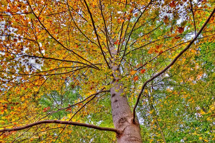 Fall Foliage-2