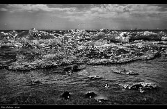 = water (Polis Poliviou) Tags: sea summer people bw mer hot art beach nature water monochrome swimming swim mar blackwhite sand agua rocks meer wasser mare artistic stones cyprus wave h2o mari environment su splash acqua deniz mediterraneansea seaview thalassa polis zypern shootingstar larnaka leau  chypre  brilliantphoto dekelia  seaspace  lovecyprus shiningstar perfectphotographeraward afiap mediterraneanisland   superaward flickraward poliviou polispoliviou notwithoutmycamera artistefiap   nosinmicmara  cyprusinyourheart allrightsreservedbypolispoliviou roklini