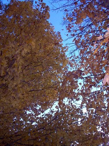 Foliage_102610
