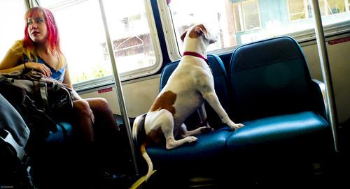 Go Dog Go!                        070612_JWS_L1010375