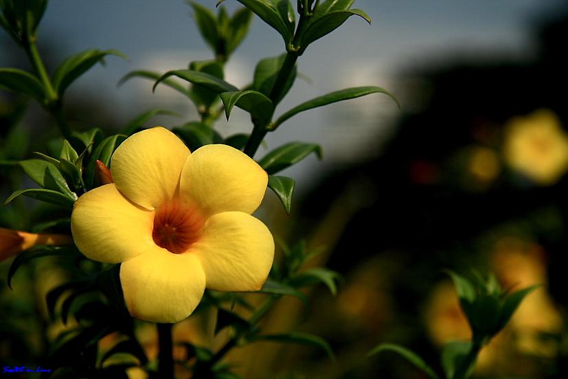 Yellow....