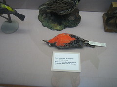 Hahahaha. What a funny way to display a bird.