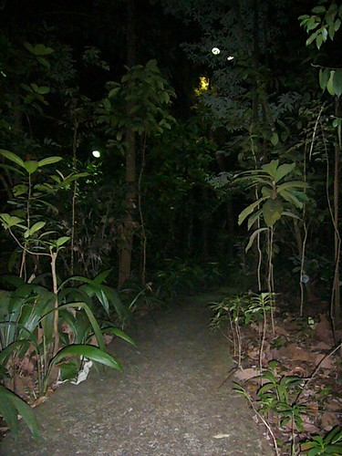 Night Safari Trail