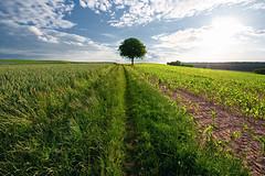 __________ (Dennis_F) Tags: blue light sky plants cloud sun tree green field grass clouds germany landscape deutschland licht spring angle sony wide pflanzen feld felder wiese himmel wolken sigma wideangle single poppy grn dslr karlsruhe landschaft sonne 1020 ultra baum frhling acker dreck mohn uwa sigma1020mm weingarten ultrawideangle sigmalens umland a700 kraichgau sigma1020 uww einzeln sonyalpha sonydslr mittig jhlingen alpha700 sonya700 sonyalpha700 dslra700 sigma1020456 sigmaobjektiv