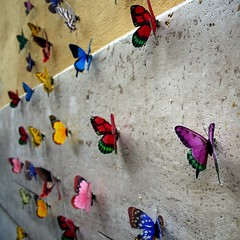 airport (claudiarndt) Tags: wall butterfly wand trastevere bunt schmetterling colourfull allotof