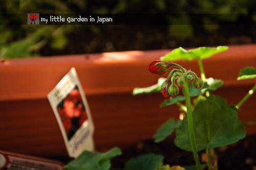 my-little-garden-in-japan-nov-2010-3