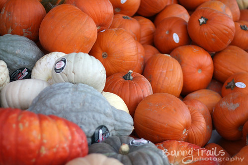 299-pumpkins pumpkins