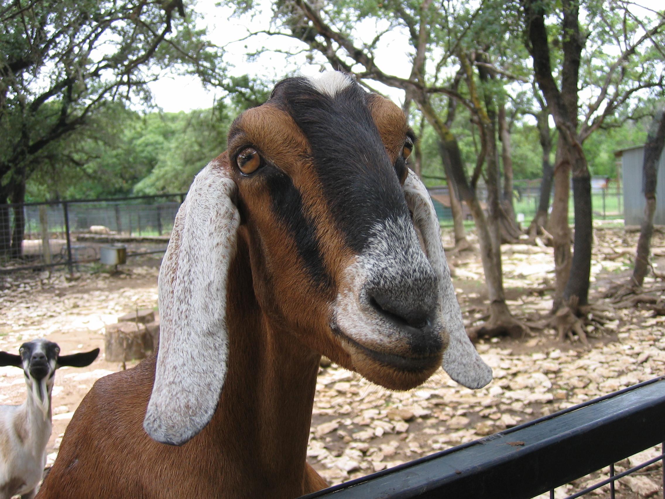 Austin Zoo and Animal Sanctuary