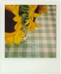 Sunflowers - Mildred Pierce Restaurant - by Charlyn W