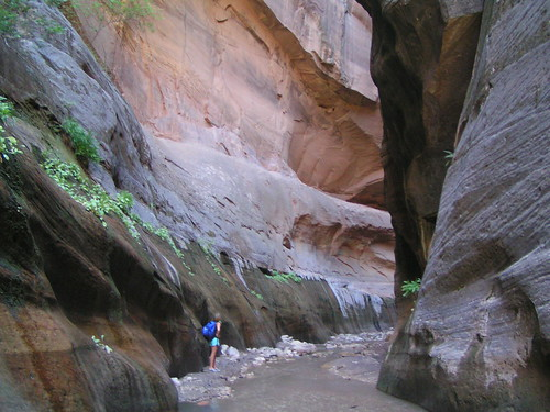 Zion Narrows V