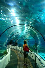 ohhh (cmedrang) Tags: barcelona aquarium searchthebest magic bcn magical mgico magia oceanario blueribbonwinner laquarium 10faves colorphotoaward cmedrang