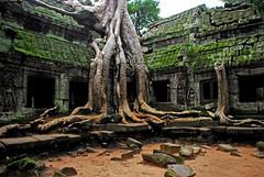 Angkor Wat Temple Complex : Ta Prohm