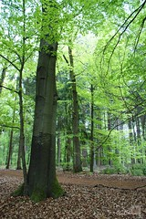 Buchenwald / beech grove (Ellenore56) Tags: wood trees light shadow inspiration color colour tree nature forest germany deutschland licht buchenwald photo europa foto sony sun