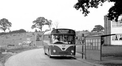 Safeguard, Guildford APA46B 1964 AEC 2U3RA Willowbrook B53F at Westborough treminus (Mega Anorak) Tags: bus guildford willowbrook westborough reliance aec safeguard