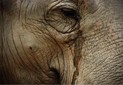 los elefantes tambien lloran