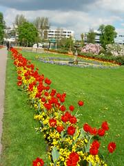 Day 23 - Stuttgart (trum auf deutsch) Tags: flowers garden zoo spring tulips blumen tierpark garten fruehling