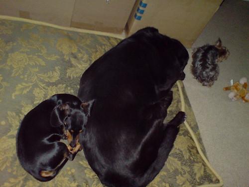 3 sleeping dogs