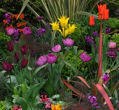 Rainy Day (Sandra Leidholdt) Tags: show uk greatbritain flowers england plant flores flower english floral gardens garden spring flora unitedkingdom britain gardening explore british malvern fiori flowershow virg 2007 rhs explored explore13 sandraleidholdt malvernspringgardeningshow leidholdt sandyleidholdt