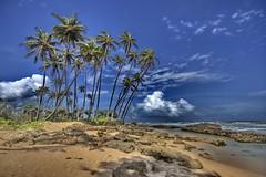 Still Palms - by robysaltori