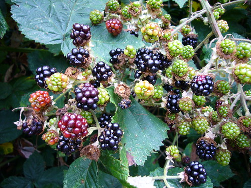 Blackberries (2)