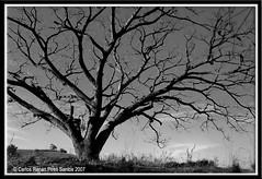 Árvore! (crenan) Tags: nature branco d50 nikon natureza pb preto 101 santamaria árvore visão fotográfica naturesfinest d80 platinumphoto câmeradeourobrasil anawesomeshot aplusphoto megashot crenan onlythebestare grupo1a10brasil carlosrenanpiressantos