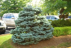 (thatcoder) Tags: tree embassysuites nikon1755mmf28
