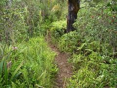 Drop to the left, drop to the right (szarmadzag) Tags: kauai hanalei kilauea kee okolehao hanaleivalleytrail