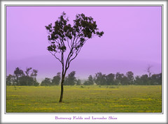Buttercup Fields and Lavender Skies (fotofantasea) Tags: flowers mountain tree yellow landscape photographer lavender australia wallart photograph fields naturesfinest 383 blueribbonwinner gympie abigfave queensalnd colorphotoaward superbmasterpiece auselite excapture hollykempe