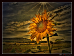 Sunflower (Eric Rousset) Tags: sky sun france flower yellow clouds photoshop jaune photography soleil bravo europe raw searchthebest cs2 sony cybershot ciel adobe sunflower soe hdr tournesol orton photomanipulated 2007 bpp postprocessing dscf828 themoulinrouge naturesfinest photomatix supershot magicdonkey tonemapping abigfave artlibre anawesomeshot impressedbeauty superaplus aplusphoto flickrplatinum superbmasterpiece wowiekazowie megashot bratanesque amazingamateur excellentphotographerawards brillianteyejewel platinumheartaward proudshopper theperfectphotographer theroadtoheaven piproduction ericrousset ericroussetphotography