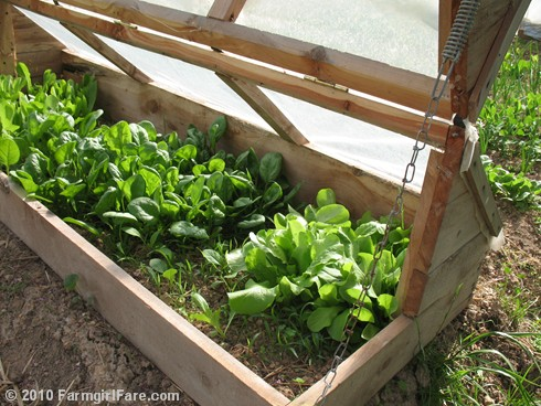 Amish Cold Frame 8