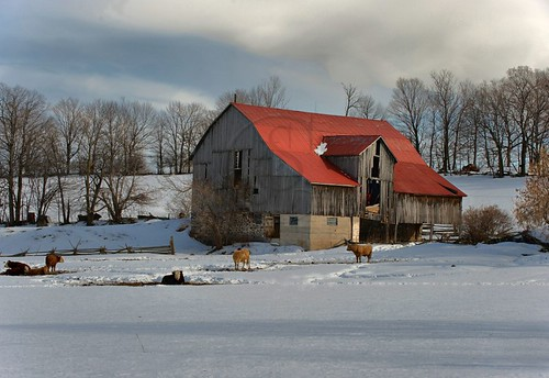 Orillia - Red-Roofed Barn (2)