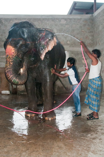 RYALE_Elephant_Village-20