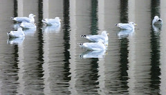Seagulls and Reflections (brooksbos) Tags: city urban seagulls reflection nature water pool birds boston reflections geotagged ma photography reflecting photo mr sony newengland cybershot science christian bostonma symphony prudential sonycybershot plaza pru bostonist masschusetts 02115 lurvely church science thatsboston christian dschx5v hx5v brooksbos