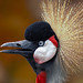 The Crowned Crane Conversationalist - by Fort Photo