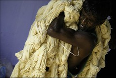 Labor (Elishams) Tags: india man indian traditional culture coton worker dying tamilnadu southindia kanchipuram mtier  teinturier