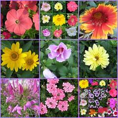 mosaic7177243   My Flowers! - by marilynnm63