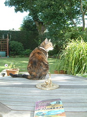 On the patio table - by Janet 59