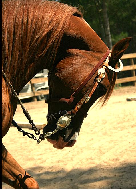 IMAGE: http://farm2.static.flickr.com/1103/1353096234_1da447ee7d_o.png