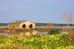 RISERVA NATURALE DI VENDICARI (peo pea) Tags: nature birds natura uccelli sicilia vendicari oasi naturale riserva peopea artofimages