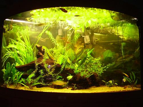 plants fish fern aquarium java tank 305 planted fluval
