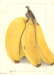 BananYenjerto