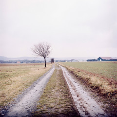 In between the fields (jade.cantwell) Tags: road film field germany track kodak 120film hasselblad hasselblad501cm kodakportra160nc mediumformatfilm mechernich